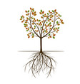 autumn spring tree vector image vector image