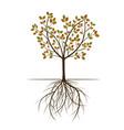 autumn spring tree vector image