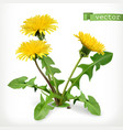 dandelion flowers 3d icon vector image