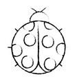 ladybug insect small icon animal vector image vector image