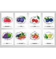 Fresh berries and calligraphic elements vector image