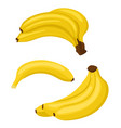 banana set bunches of fresh banana fruits and vector image