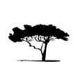 silhouette of acacia tree vector image vector image