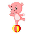a baby circus hippo balancing on a big ball vector image vector image