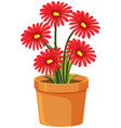 pot flowers on white background vector image vector image