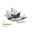 soybean hand drawn set vector image vector image