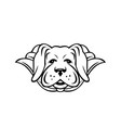 super yellow labrador dog wearing cape front view vector image vector image
