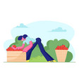 woman farmer pick apple harvest to basket and box vector image