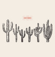 set of cactuses hand drawn ink vector image