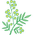 mimosa branch isolated doodle and cartoon floral vector image vector image