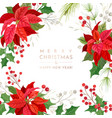 christmas poinsettia flower card party vector image vector image
