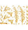 oat plants rolled oats 3d realistic icon set vector image