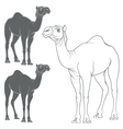 set image a camel vector image