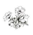 summer garden blooming flowers monochrome vector image