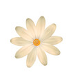 almost white light yellow flower one isolated vector image