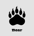 black bear paw with claws vector image vector image