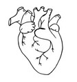 doodle the human heart drawn with vector image