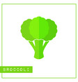 isolated green broccoli memory training card vector image