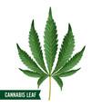 marijuana leaf green hemp cannabis sativa vector image