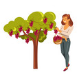 grapes harvest collecting winemaking woman with vector image vector image