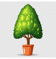 green tree in pot on transparent background vector image vector image