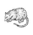 opossum animal sketch engraving vector image