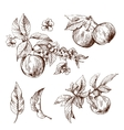 sketching of apples vector image vector image