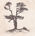 hand drawing larch tree vector image vector image