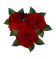 three red roses vector image