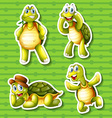 Turtle in four different poses vector image