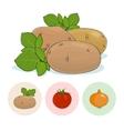 Icons Potato Tomatoes Onion vector image vector image