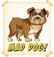 Mad dog vector image