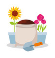 potted flower roses and sunflower sack soil and vector image