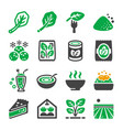 spinach icon vector image vector image