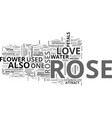 a rose is not just a rose text word cloud concept vector image vector image