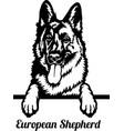 european shepherd peeking dog - head isolated vector image vector image
