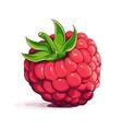 Ripe raspberry vector image vector image