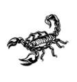tattoo scorpion zodiac vector image vector image