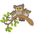 three cute owls on branch vector image