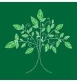 tree emblem tree icon for logo vector image