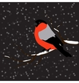 Bullfinch on the fir branch snowfall Winter or vector image vector image