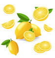 collection of lemon icons fruits isolated on white vector image