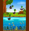 duck in the river vector image