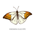 set hand drawn colored hebomoia vector image