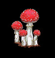 family of fly agaric mushrooms isolated vector image