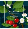 Floral background with cherry berries and cherry vector image vector image