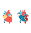 human heart and blood flow vector image vector image