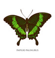 set hand drawn colored papilio palinurus vector image vector image