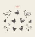 ducks hand drawn sketch vector image