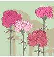 carnations vector image